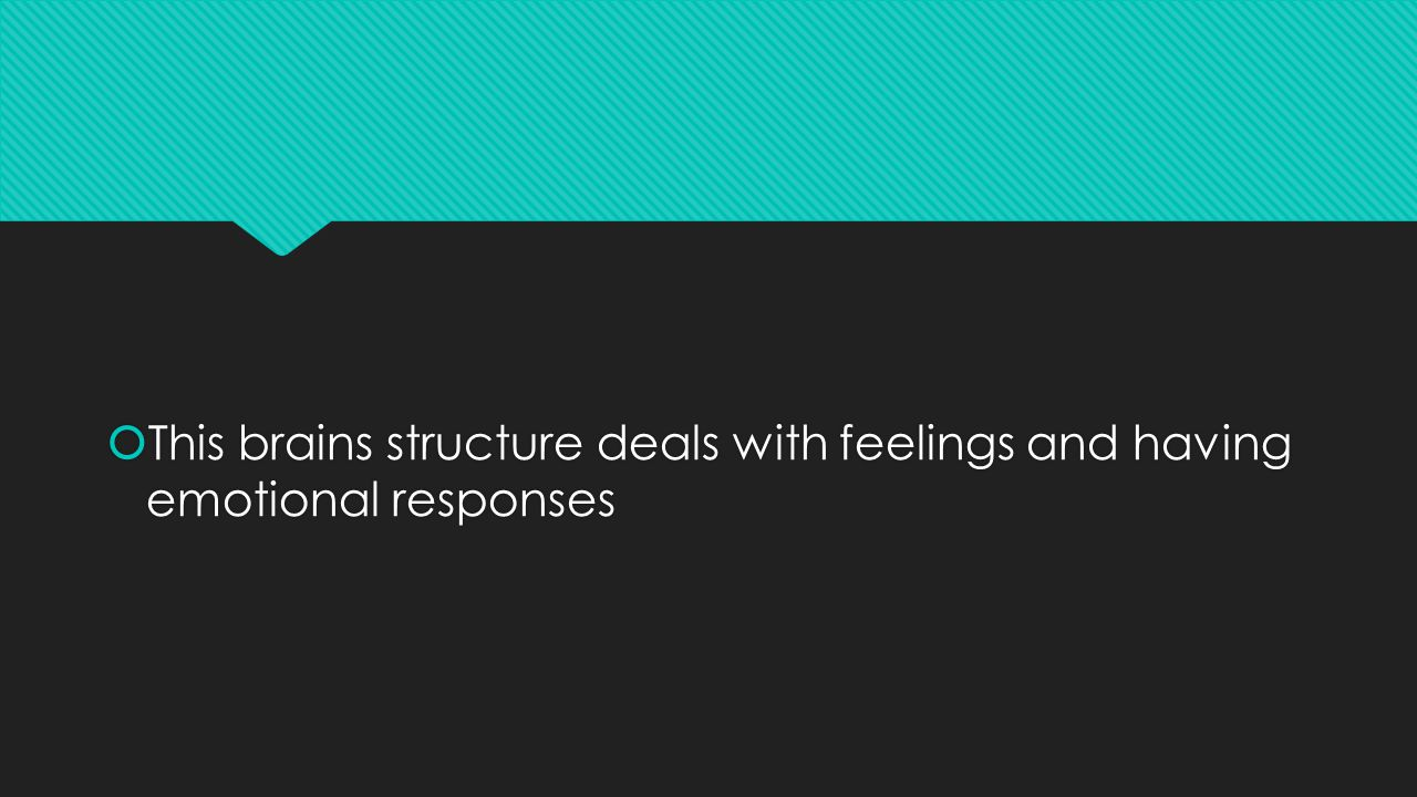  This brains structure deals with feelings and having emotional responses
