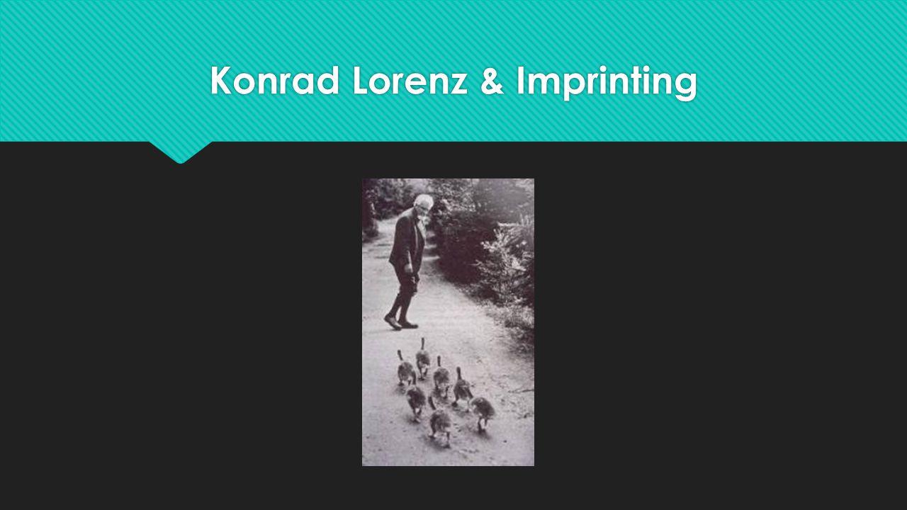 Konrad Lorenz & Imprinting