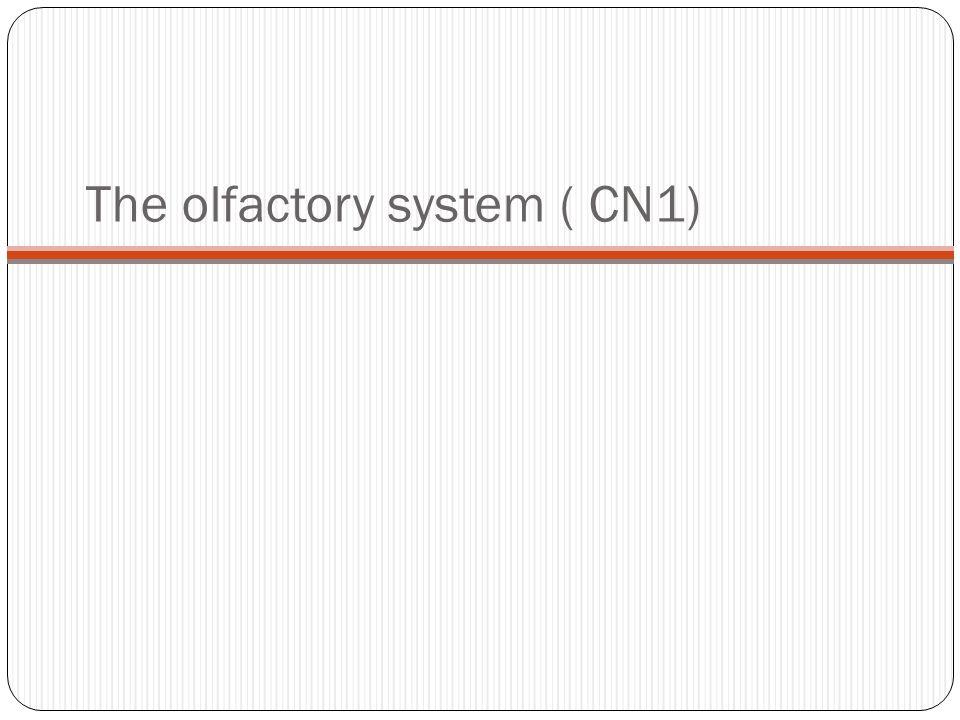 Q1.Fiber bundles of the limbic system includes a.