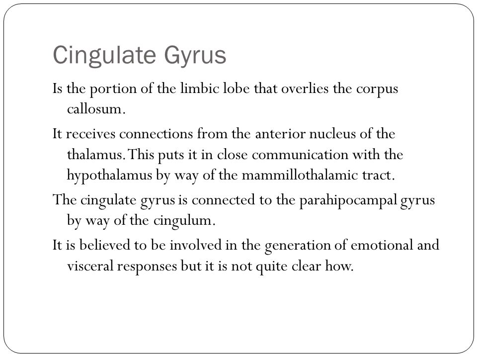 Cingulate Gyrus Is the portion of the limbic lobe that overlies the corpus callosum. It receives connections from the anterior nucleus of the thalamus