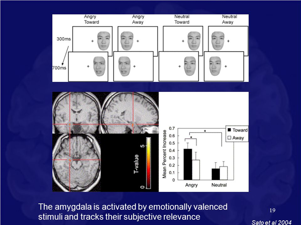 19 Sato et al 2004 The amygdala is activated by emotionally valenced stimuli and tracks their subjective relevance