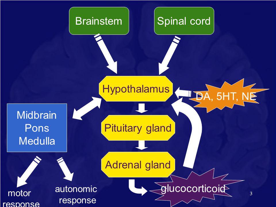 3 Hypothalamus Pituitary glandAdrenal gland Midbrain Pons Medulla DA, 5HT, NE motor response Spinal cord Brainstem glucocorticoid autonomic response