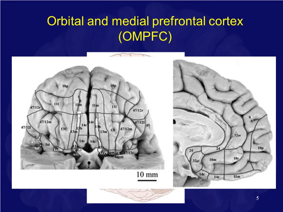5 Orbital and medial prefrontal cortex (OMPFC) Price, 2007
