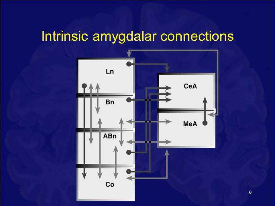 Intrinsic amygdalar connections 9