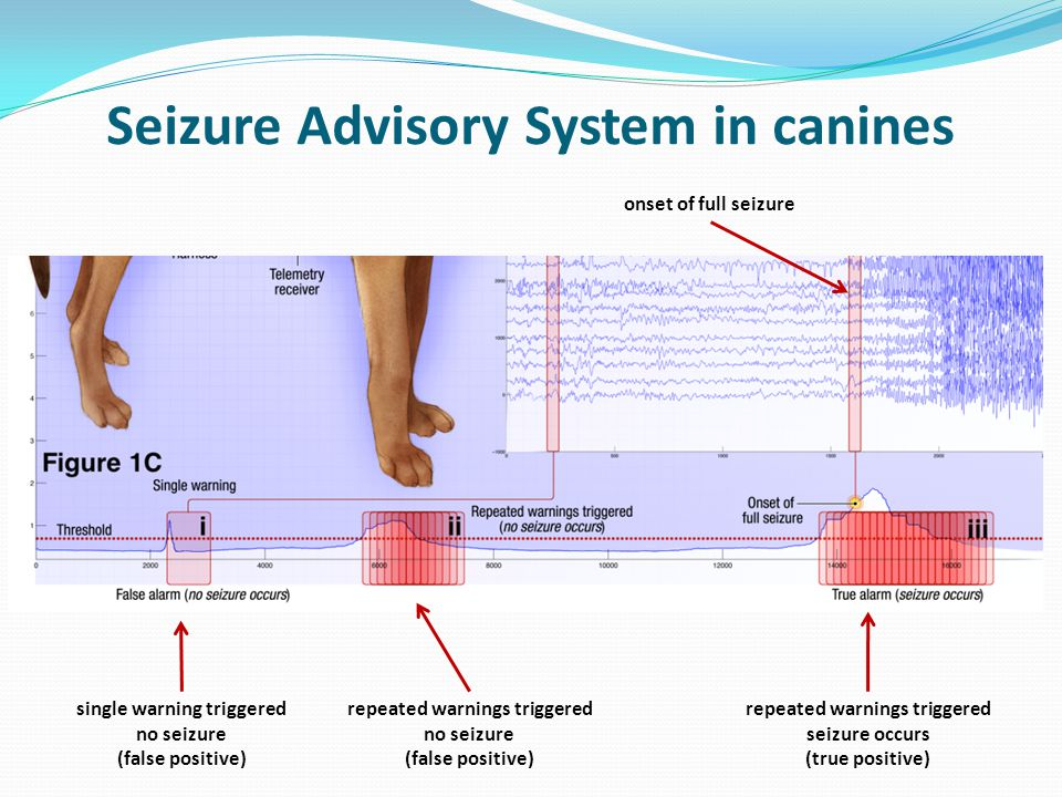 Seizure Advisory System in canines single warning triggered no seizure (false positive) repeated warnings triggered no seizure (false positive) repeated warnings triggered seizure occurs (true positive) onset of full seizure