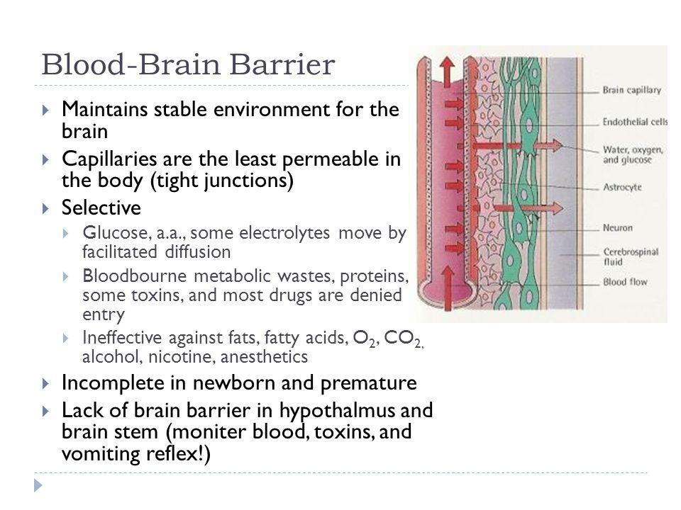 Blood-Brain Barrier  Maintains stable environment for the brain  Capillaries are the least permeable in the body (tight junctions)  Selective  Glucose, a.a., some electrolytes move by facilitated diffusion  Bloodbourne metabolic wastes, proteins, some toxins, and most drugs are denied entry  Ineffective against fats, fatty acids, O 2, CO 2, alcohol, nicotine, anesthetics  Incomplete in newborn and premature  Lack of brain barrier in hypothalmus and brain stem (moniter blood, toxins, and vomiting reflex!)