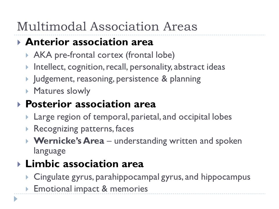Multimodal Association Areas  Anterior association area  AKA pre-frontal cortex (frontal lobe)  Intellect, cognition, recall, personality, abstract ideas  Judgement, reasoning, persistence & planning  Matures slowly  Posterior association area  Large region of temporal, parietal, and occipital lobes  Recognizing patterns, faces  Wernicke's Area – understanding written and spoken language  Limbic association area  Cingulate gyrus, parahippocampal gyrus, and hippocampus  Emotional impact & memories