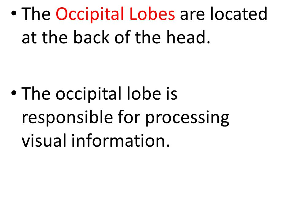 The Occipital Lobes are located at the back of the head. The occipital lobe is responsible for processing visual information.