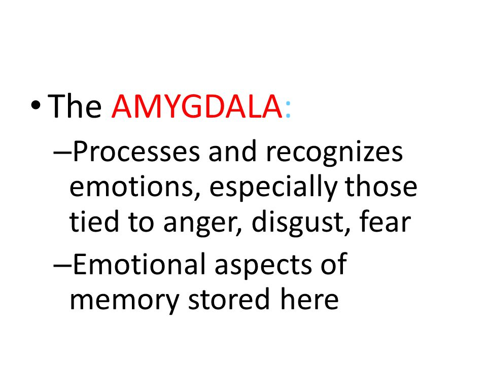 The AMYGDALA: – Processes and recognizes emotions, especially those tied to anger, disgust, fear – Emotional aspects of memory stored here