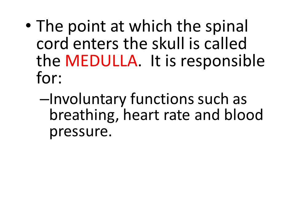 The point at which the spinal cord enters the skull is called the MEDULLA.