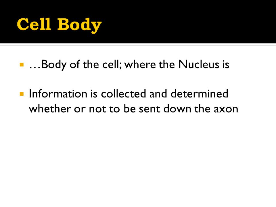  …Body of the cell; where the Nucleus is  Information is collected and determined whether or not to be sent down the axon