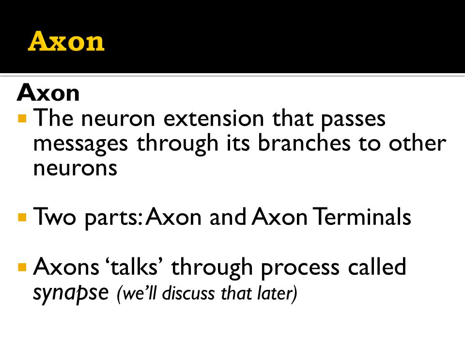 Axon  The neuron extension that passes messages through its branches to other neurons  Two parts: Axon and Axon Terminals  Axons 'talks' through process called synapse (we'll discuss that later)