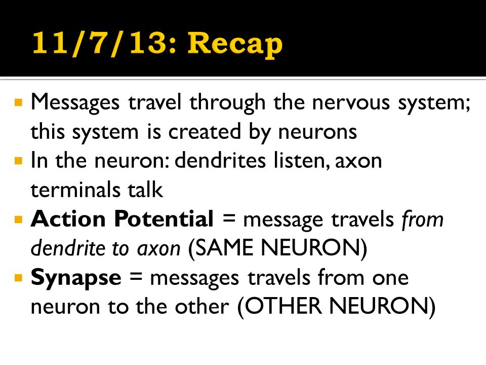  Messages travel through the nervous system; this system is created by neurons  In the neuron: dendrites listen, axon terminals talk  Action Potential = message travels from dendrite to axon (SAME NEURON)  Synapse = messages travels from one neuron to the other (OTHER NEURON)