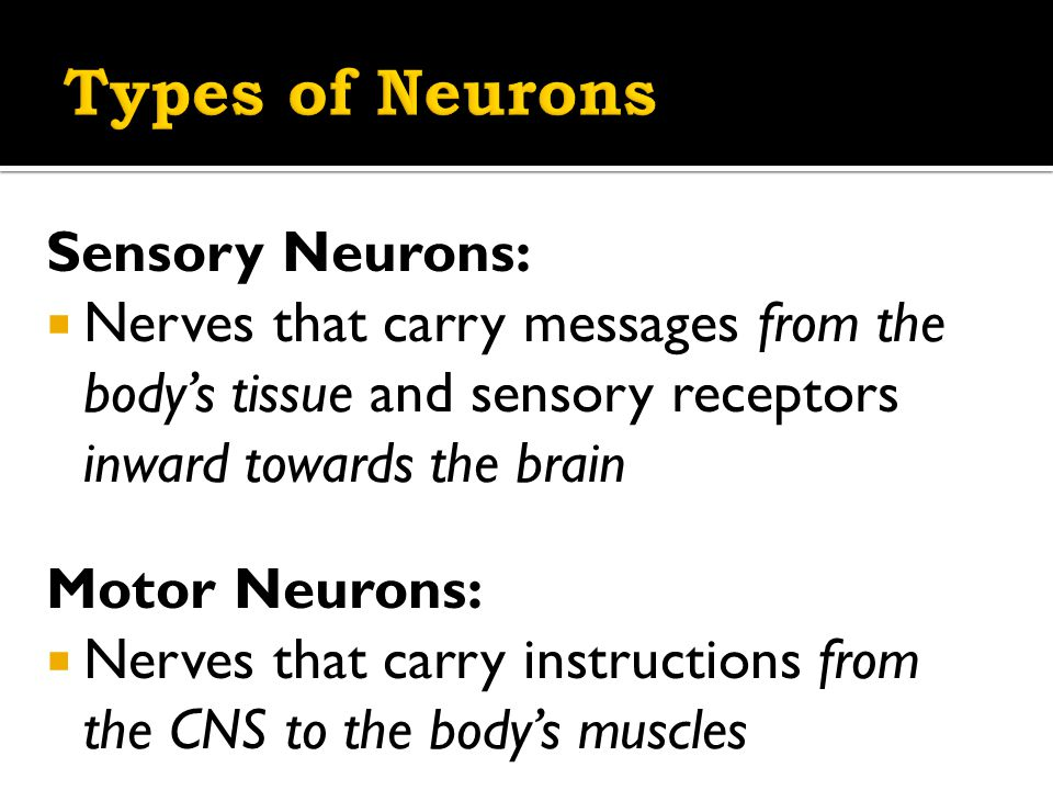 Functions:  Received messages from senses  Self-location  Self-Orientation  Sensory cortex