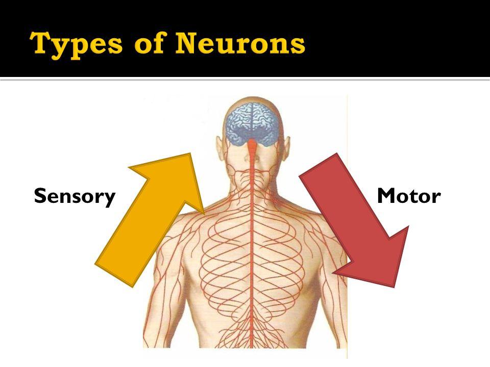 SensoryMotor