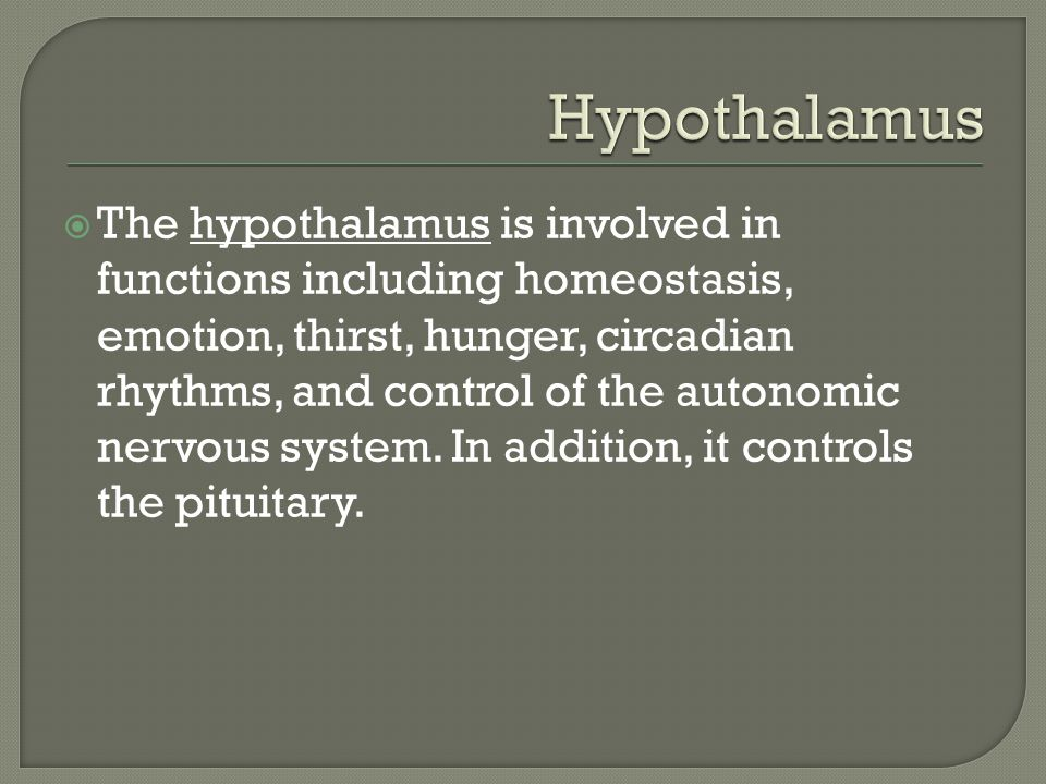  The hypothalamus is involved in functions including homeostasis, emotion, thirst, hunger, circadian rhythms, and control of the autonomic nervous system.