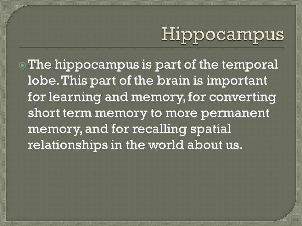  The hippocampus is part of the temporal lobe.