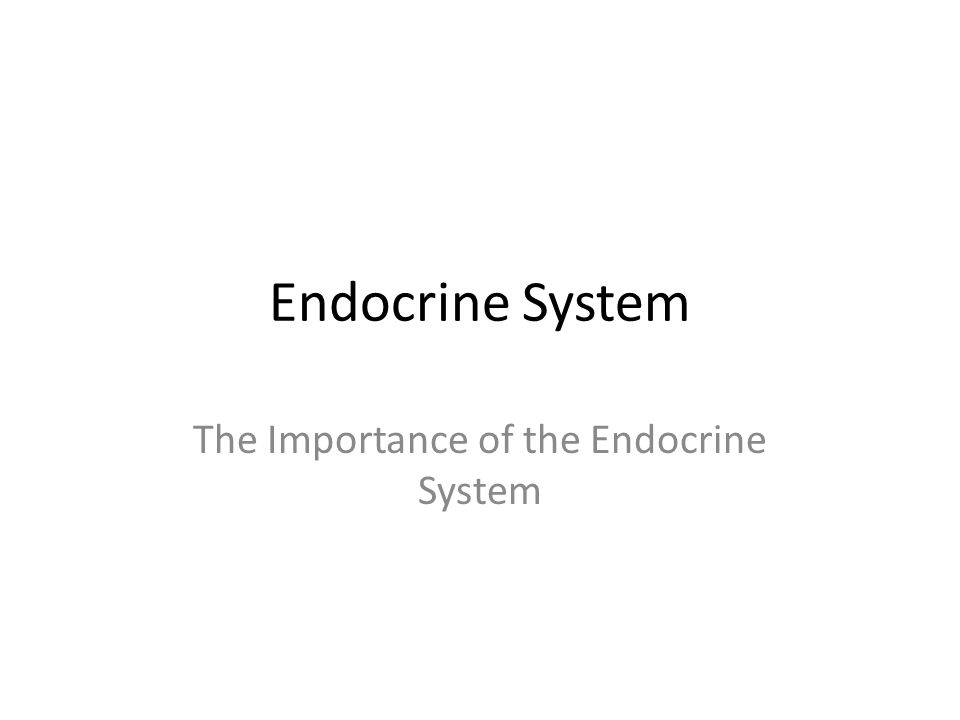 Endocrine System The Importance of the Endocrine System