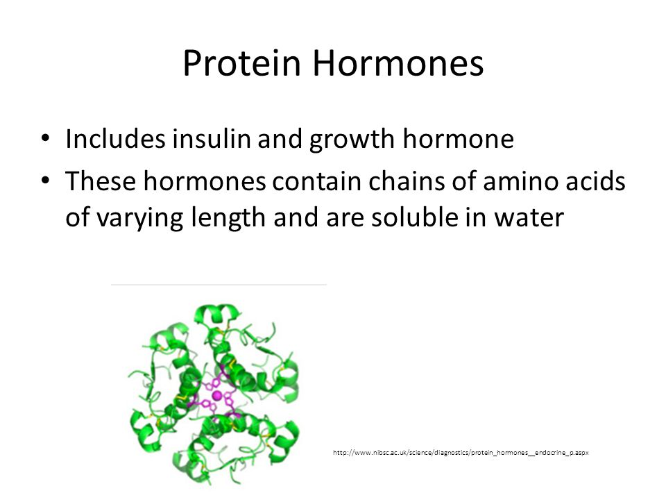 Protein Hormones Includes insulin and growth hormone These hormones contain chains of amino acids of varying length and are soluble in water http://ww