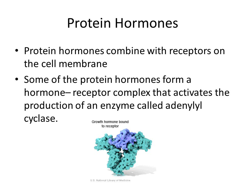 Protein Hormones Protein hormones combine with receptors on the cell membrane Some of the protein hormones form a hormone– receptor complex that activates the production of an enzyme called adenylyl cyclase.
