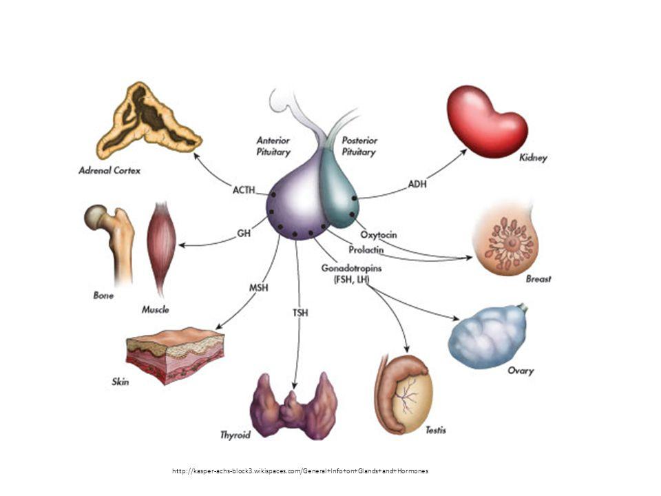 http://kasper-achs-block3.wikispaces.com/General+Info+on+Glands+and+Hormones