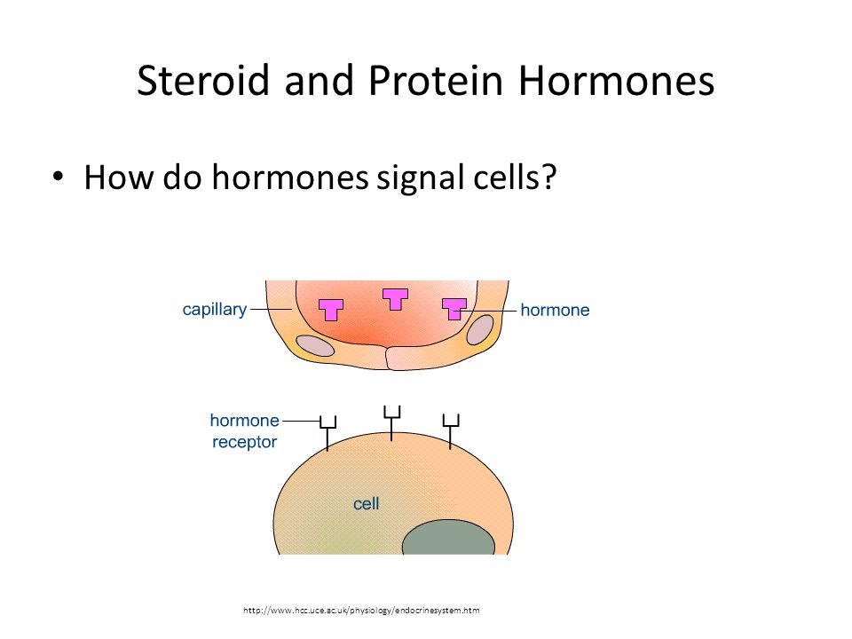 Steroid and Protein Hormones How do hormones signal cells.