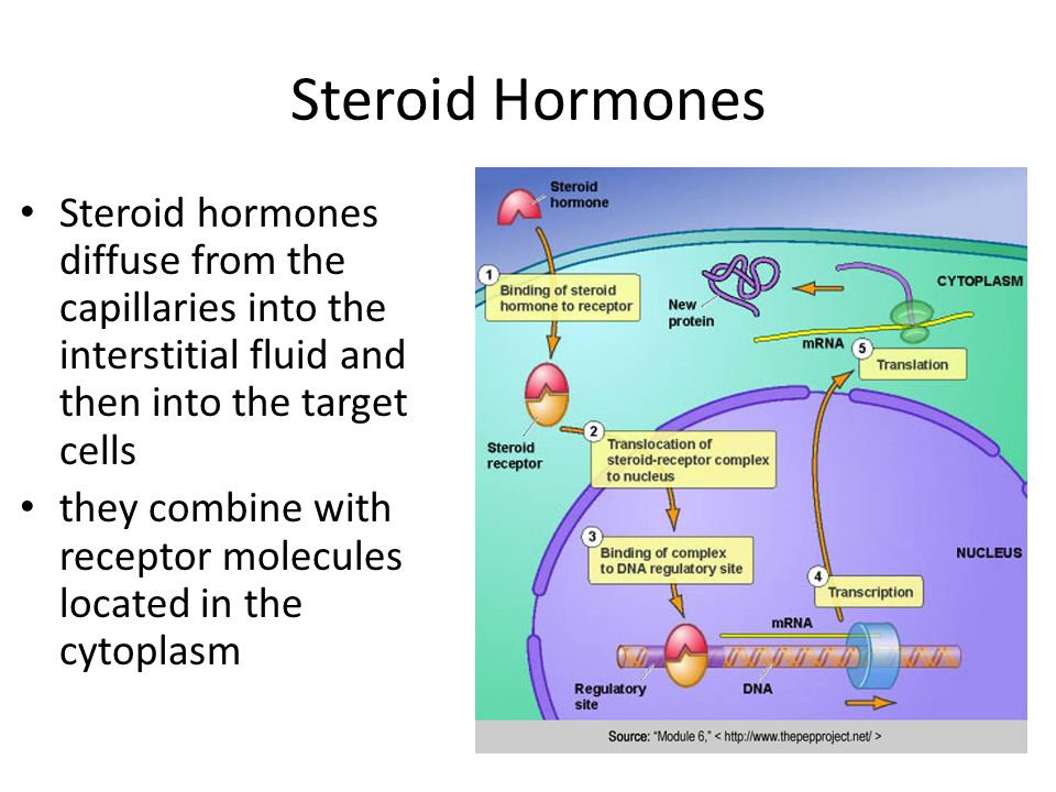 Steroid Hormones Steroid hormones diffuse from the capillaries into the interstitial fluid and then into the target cells they combine with receptor molecules located in the cytoplasm