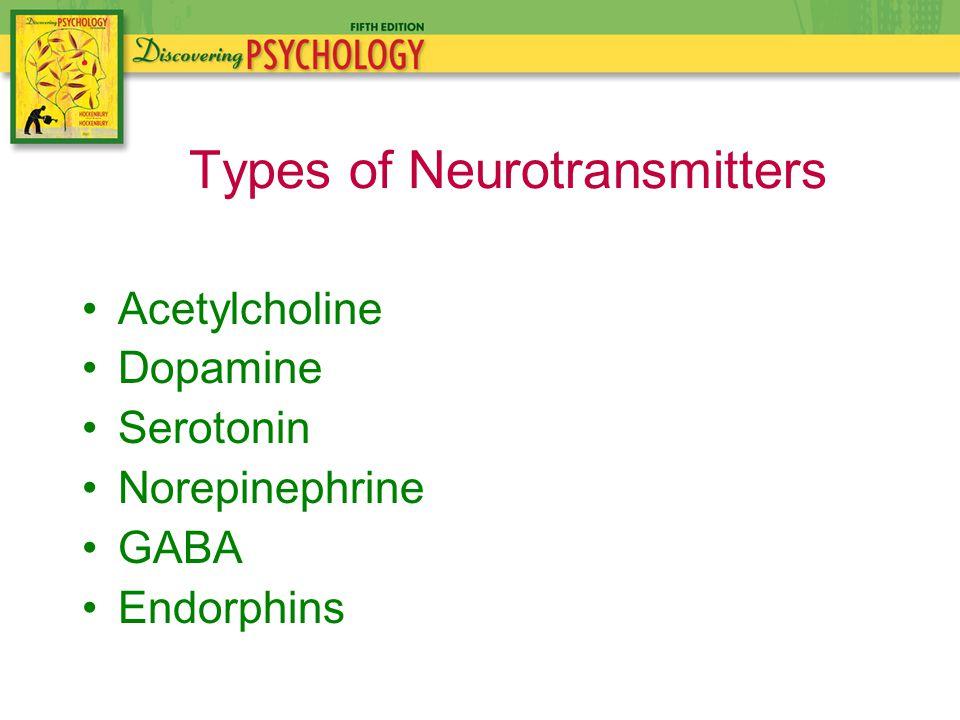 Acetylcholine Dopamine Serotonin Norepinephrine GABA Endorphins Types of Neurotransmitters