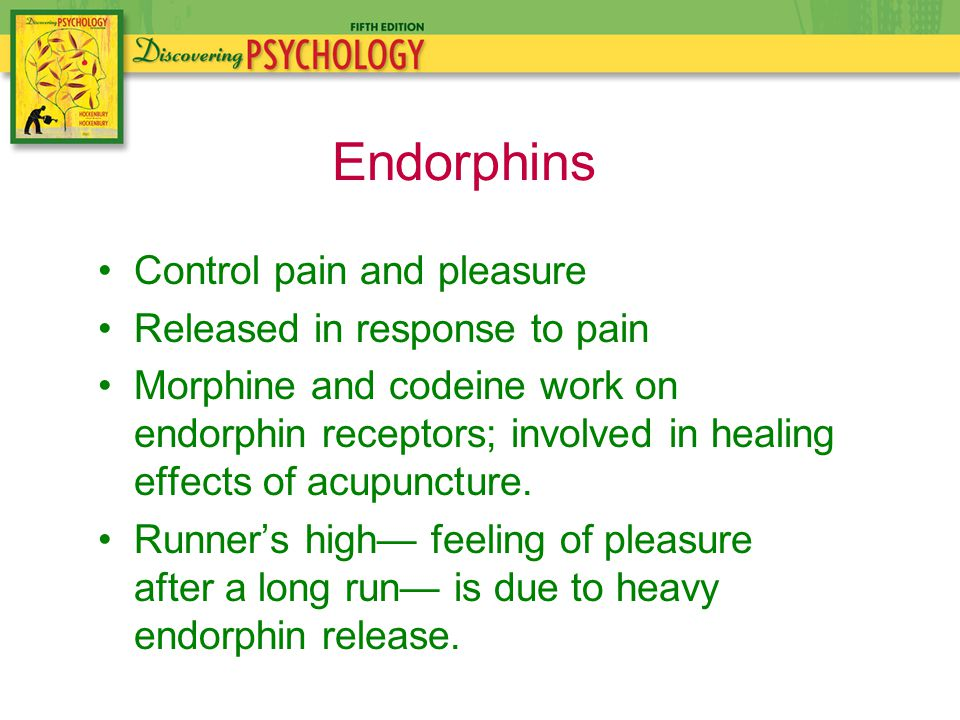 Control pain and pleasure Released in response to pain Morphine and codeine work on endorphin receptors; involved in healing effects of acupuncture.