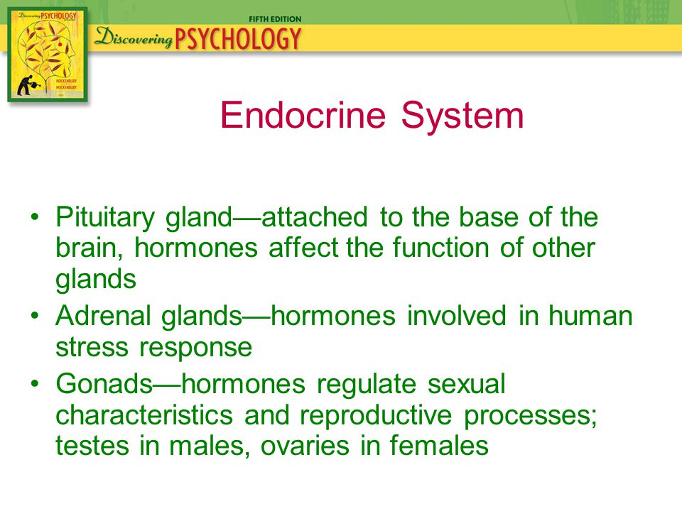 Pituitary gland—attached to the base of the brain, hormones affect the function of other glands Adrenal glands—hormones involved in human stress response Gonads—hormones regulate sexual characteristics and reproductive processes; testes in males, ovaries in females Endocrine System