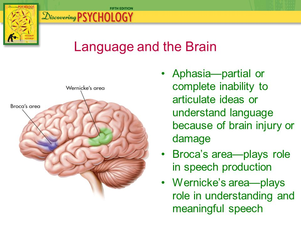 Aphasia—partial or complete inability to articulate ideas or understand language because of brain injury or damage Broca's area—plays role in speech production Wernicke's area—plays role in understanding and meaningful speech Language and the Brain