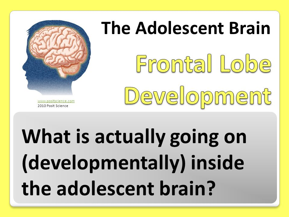 What is actually going on (developmentally) inside the adolescent brain? The Adolescent Brain www.positscience.com 2010 Posit Science