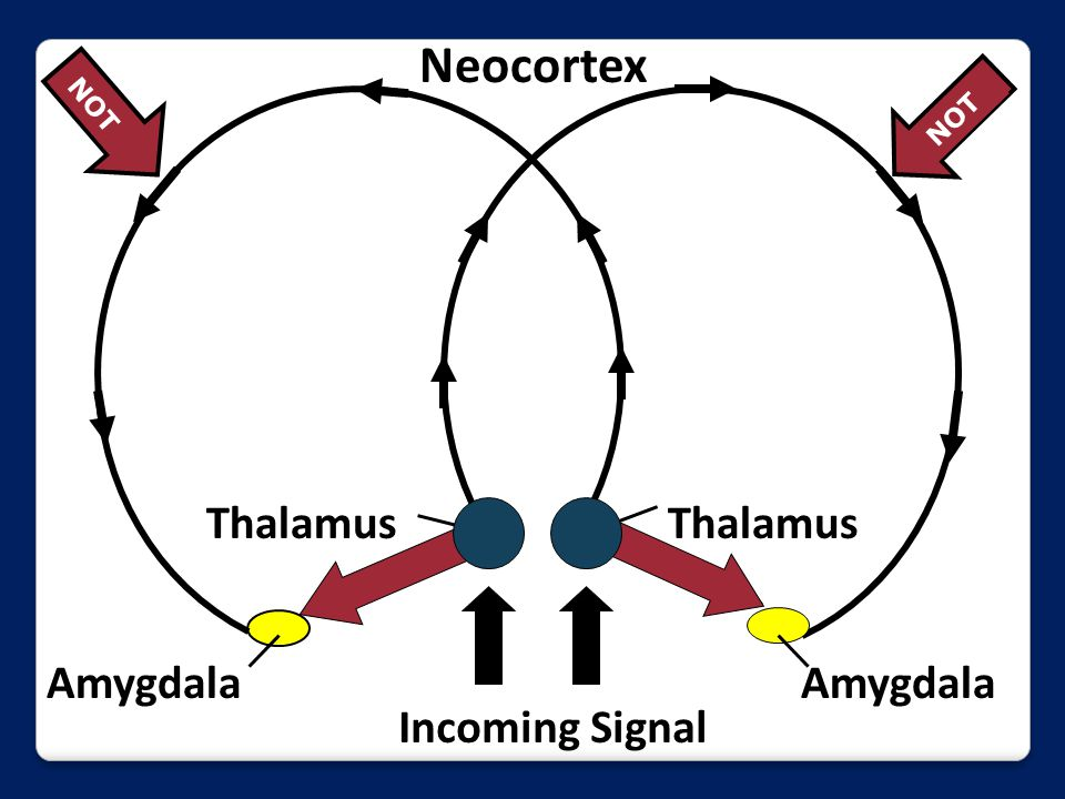 Incoming Signal Amygdala Thalamus Neocortex NOT