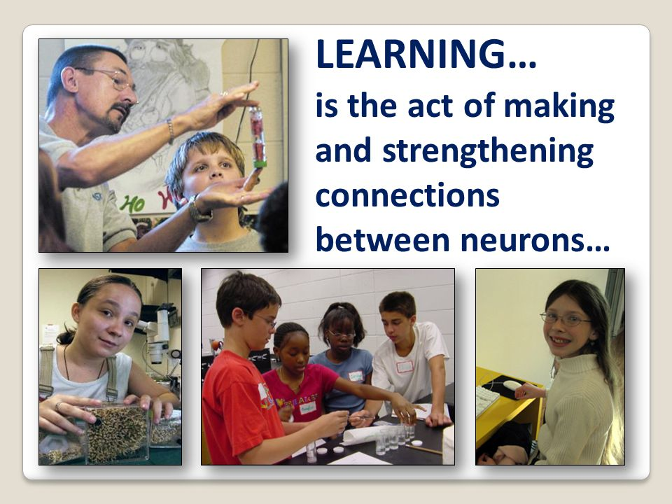 is the act of making and strengthening connections between neurons… LEARNING…