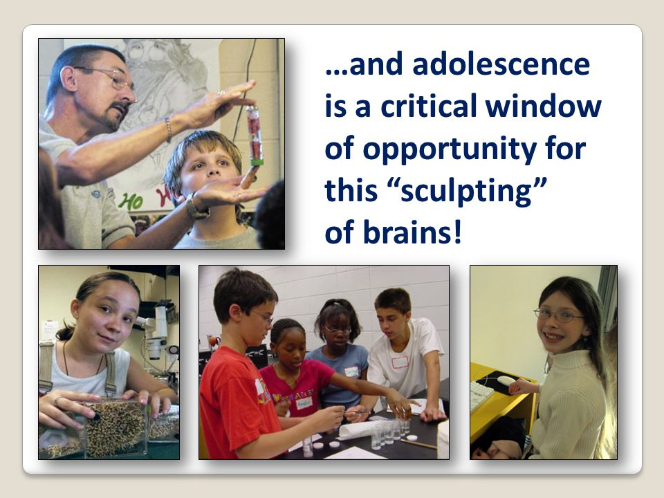 "…and adolescence is a critical window of opportunity for this ""sculpting"" of brains!"