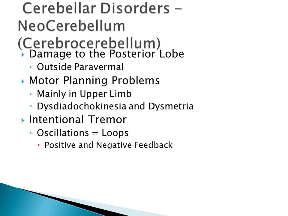  Damage to the Posterior Lobe ◦ Outside Paravermal  Motor Planning Problems ◦ Mainly in Upper Limb ◦ Dysdiadochokinesia and Dysmetria  Intentional Tremor ◦ Oscillations = Loops  Positive and Negative Feedback