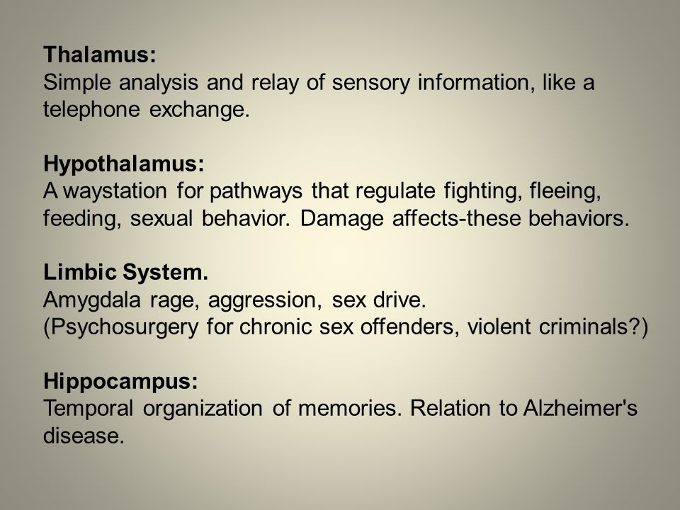 Thalamus: Simple analysis and relay of sensory information, like a telephone exchange.
