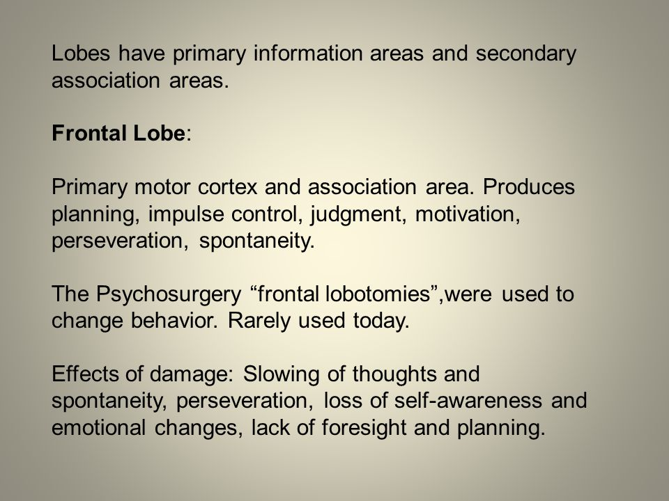 Lobes have primary information areas and secondary association areas.