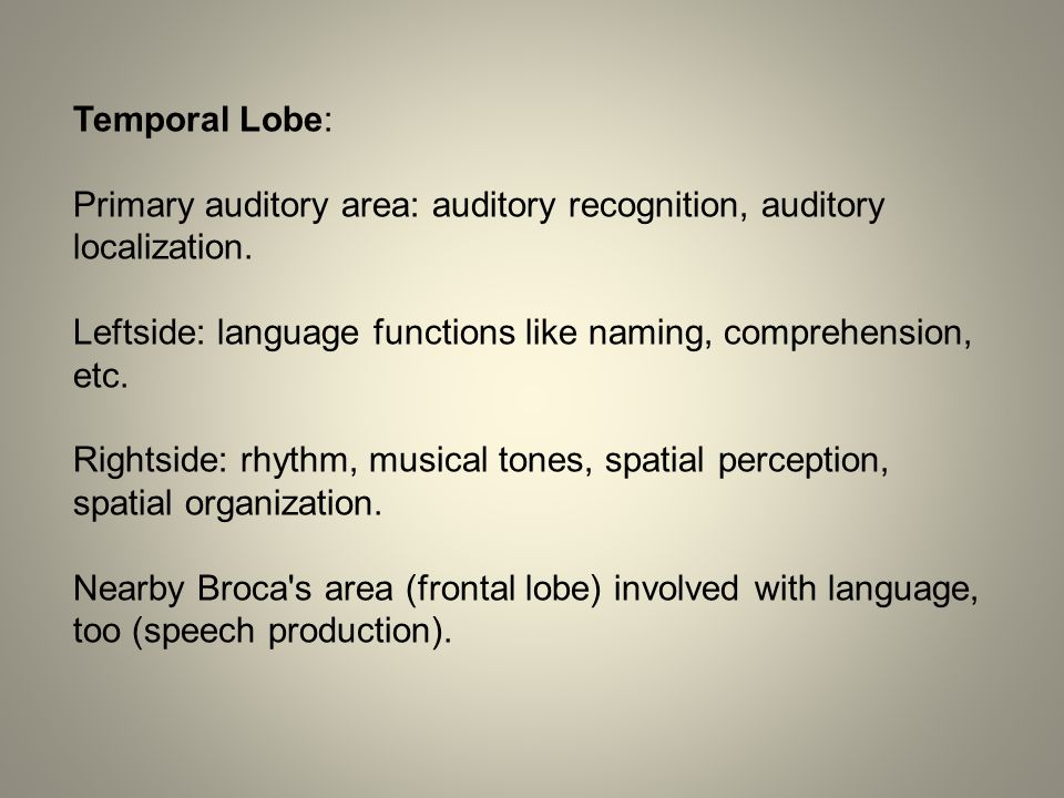 Temporal Lobe: Primary auditory area: auditory recognition, auditory localization.