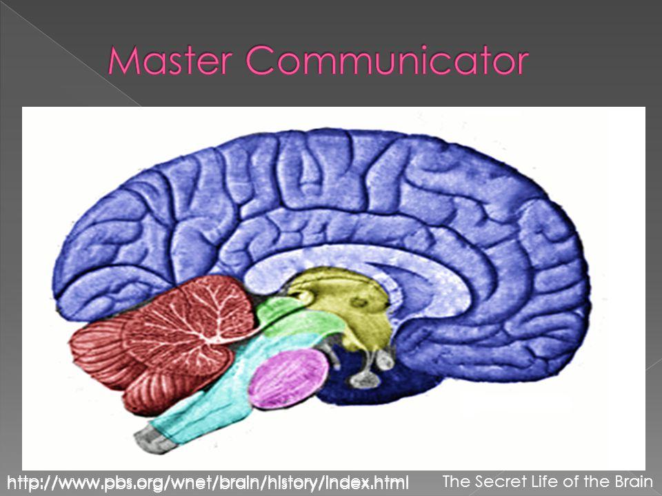  kkl http://www.pbs.org/wnet/brain/history/index.htmlThe Secret Life of the Brain http://www.pbs.org/wnet/brain/history/index.html