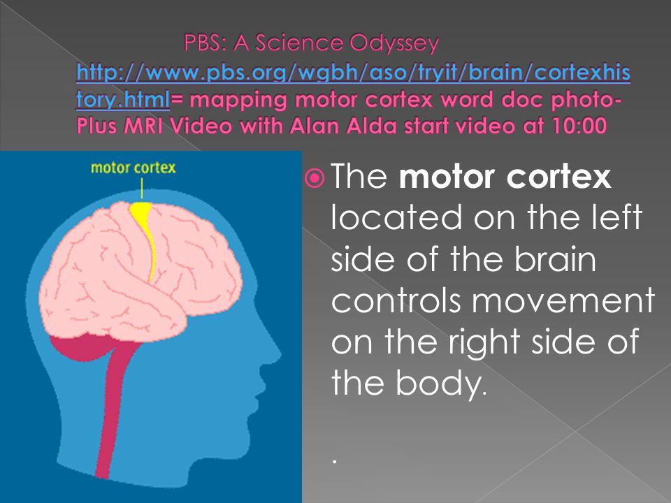  The motor cortex located on the left side of the brain controls movement on the right side of the body..
