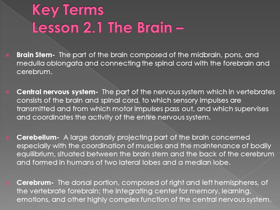  Brain Stem- The part of the brain composed of the midbrain, pons, and medulla oblongata and connecting the spinal cord with the forebrain and cerebrum.