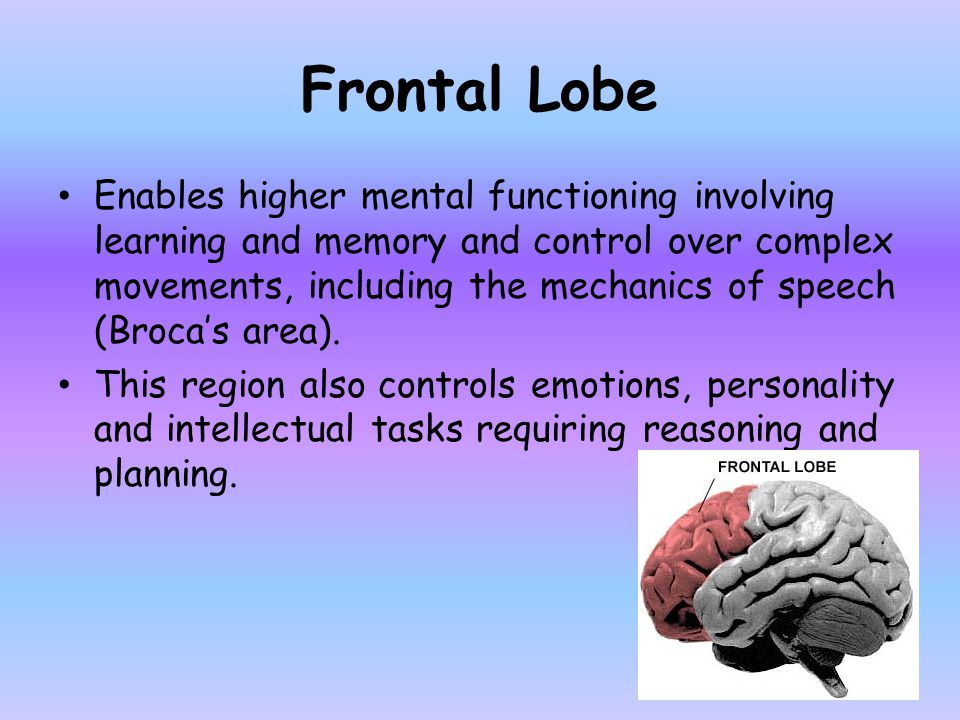 Frontal Lobe Enables higher mental functioning involving learning and memory and control over complex movements, including the mechanics of speech (Br