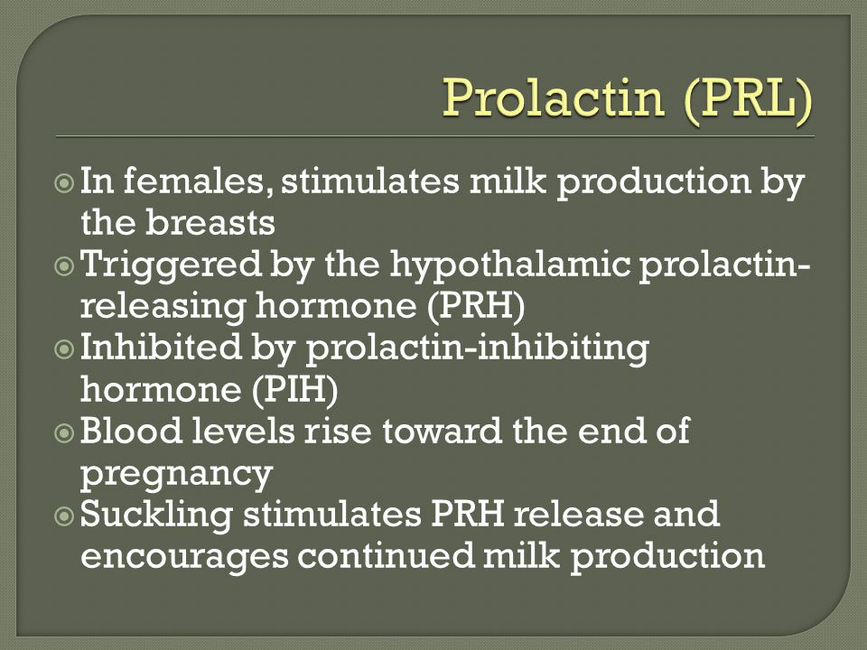  In females, stimulates milk production by the breasts  Triggered by the hypothalamic prolactin- releasing hormone (PRH)  Inhibited by prolactin-inhibiting hormone (PIH)  Blood levels rise toward the end of pregnancy  Suckling stimulates PRH release and encourages continued milk production