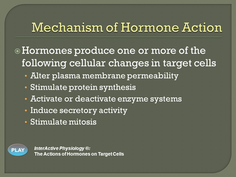  Hormones produce one or more of the following cellular changes in target cells Alter plasma membrane permeability Stimulate protein synthesis Activate or deactivate enzyme systems Induce secretory activity Stimulate mitosis PLAY InterActive Physiology ®: The Actions of Hormones on Target Cells