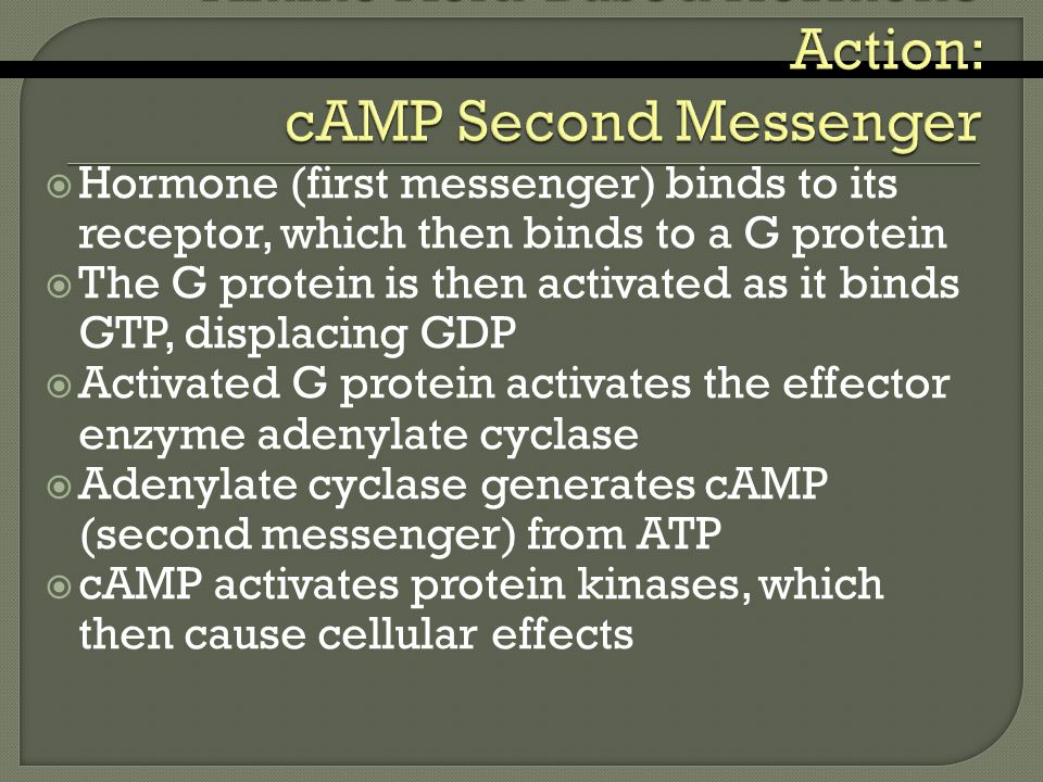  Hormone (first messenger) binds to its receptor, which then binds to a G protein  The G protein is then activated as it binds GTP, displacing GDP  Activated G protein activates the effector enzyme adenylate cyclase  Adenylate cyclase generates cAMP (second messenger) from ATP  cAMP activates protein kinases, which then cause cellular effects