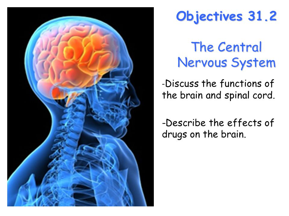 Lesson Overview Lesson Overview The Central Nervous System Objectives 31.2 The Central Nervous System - Discuss the functions of the brain and spinal