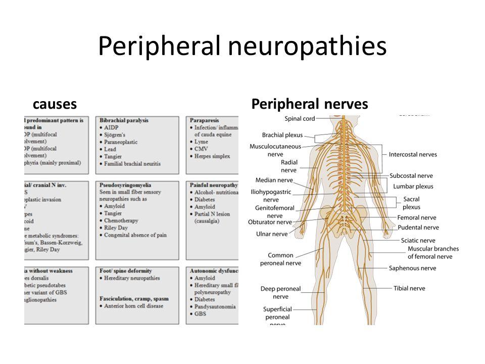 Peripheral neuropathies causesPeripheral nerves