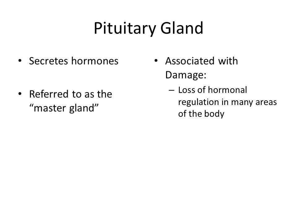 """Pituitary Gland Secretes hormones Referred to as the """"master gland"""" Associated with Damage: – Loss of hormonal regulation in many areas of the body"""