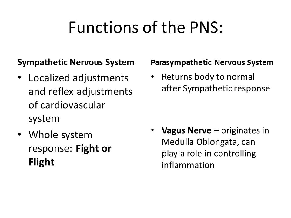 Functions of the PNS: Sympathetic Nervous System Localized adjustments and reflex adjustments of cardiovascular system Whole system response: Fight or